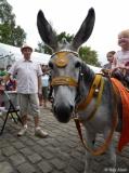 Barnoldswick Beach: Donkeys