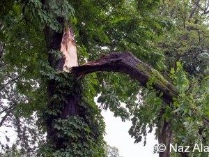 Gisburn_Road_Tree_Down_3