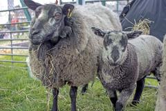 Mark Townson Sheep & Goats Petting Zoo